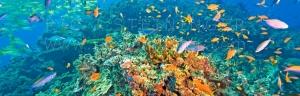 Coral Marine