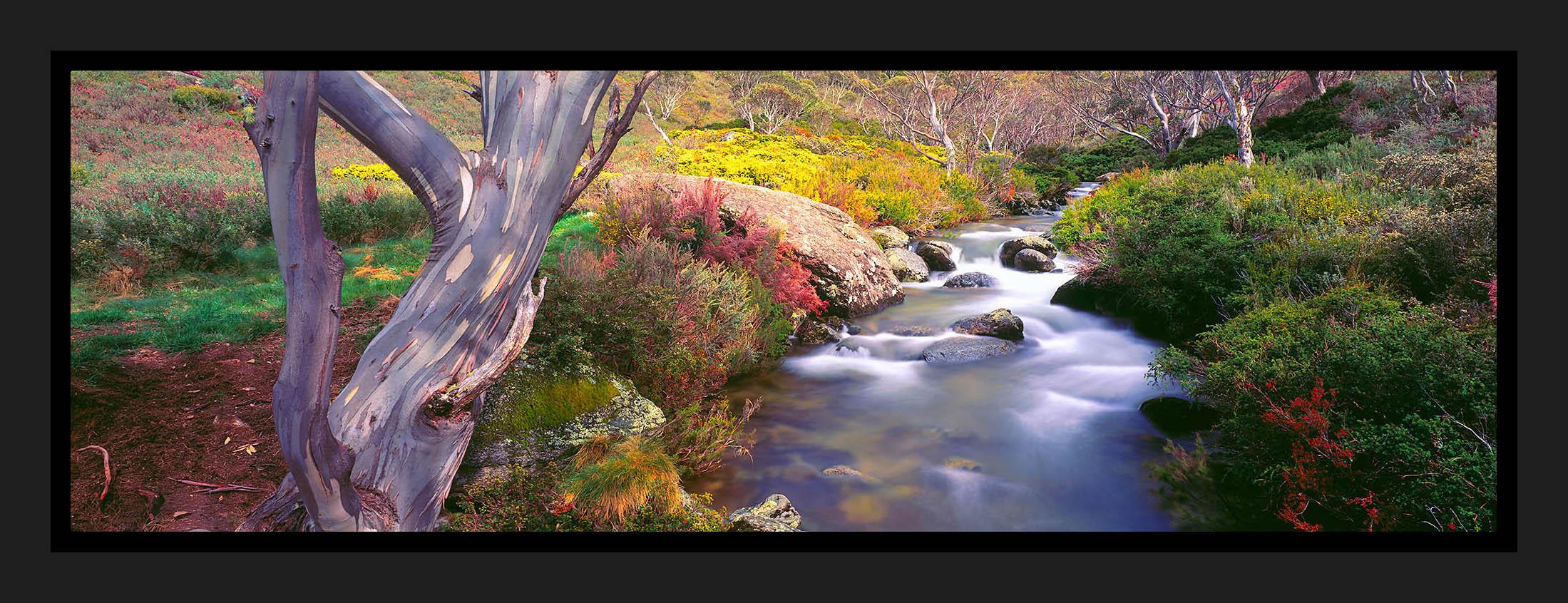 Kosciusko Springs